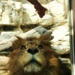 2/22猫の日の王子動物園に行ってきた